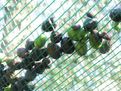 Rete per Olive con Occhielli 10x10 mt TENAX