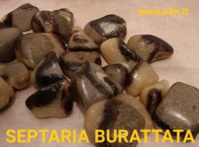 SEPTARIA BURATTATA