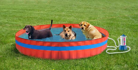 Piscina per animali MY DOG POOL 305 PRO diametro 305 alta 30 con filtro cartuccia