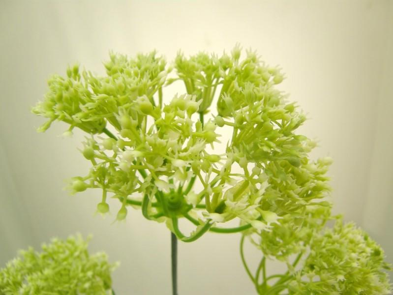 ACHILLEA SPRAY X 3 - WHITE