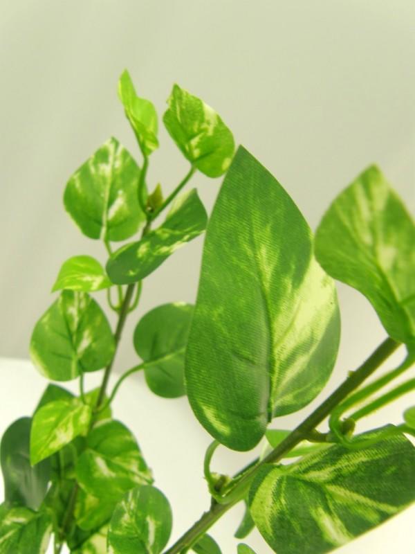 POTHOS SPRAY - GREEN