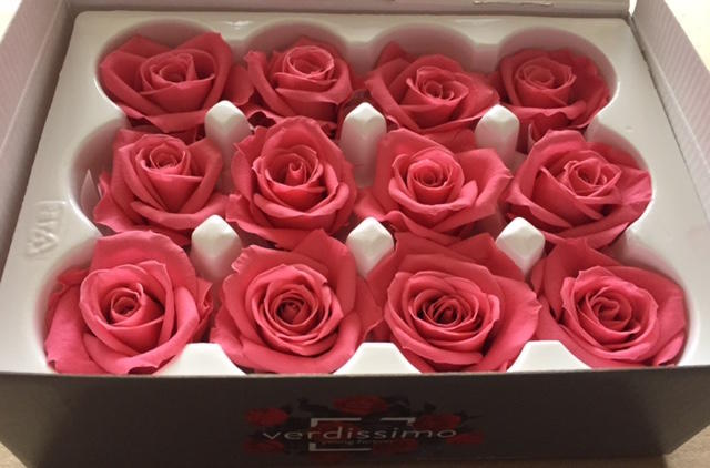 ROSA BOCCIOLO MINI DARK PINK STABILIZZATA - BOX DA 12