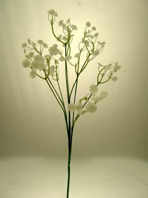 GYPSOPHILA WHITE - MEDIA