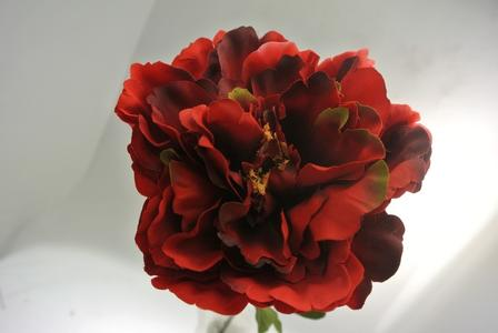 PEONIA ROSSA RED