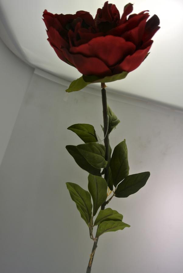 PEONIA ROSSA RED