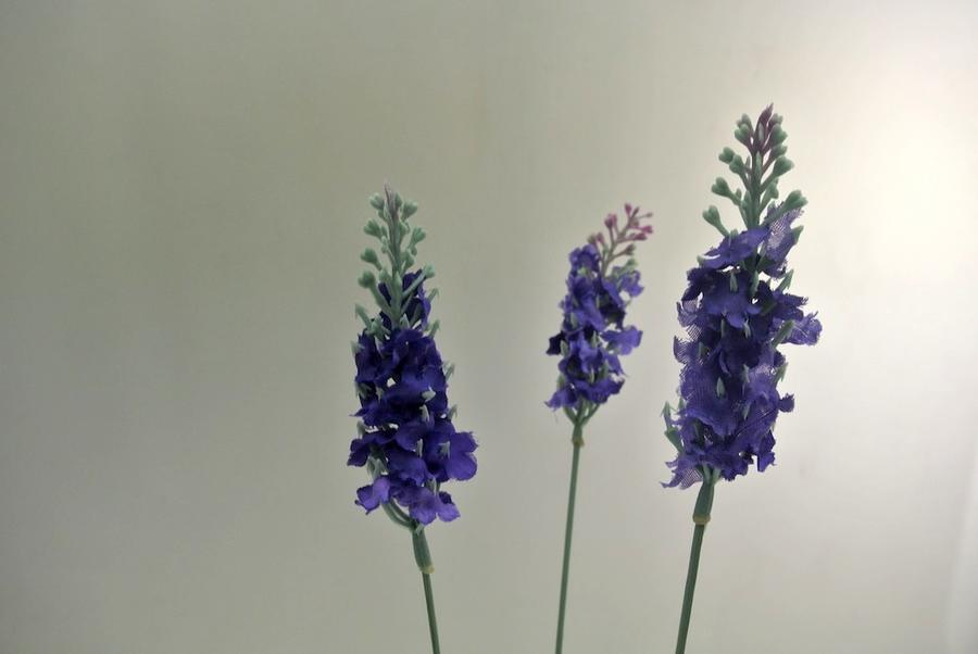 LAVANDA SPRAY X 3 - COLORE LAVANDER