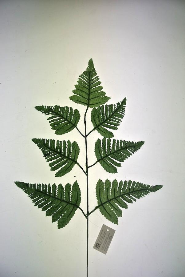 FOGLIA DI FELCE - VERDE GREEN