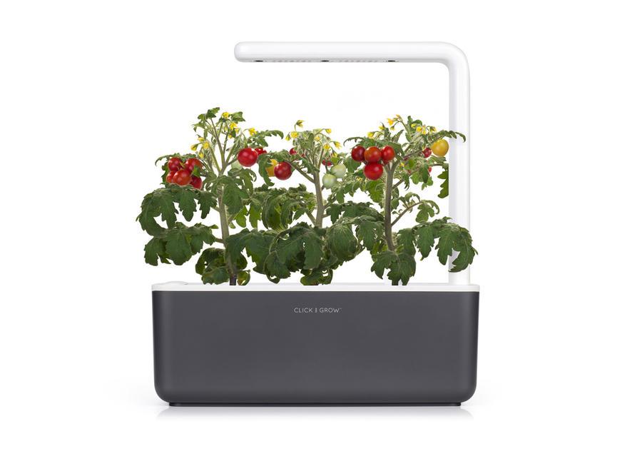 Mini Pomodori