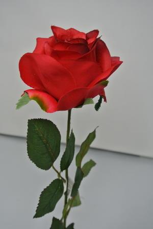 ROSA SINGOLA ROSSA RED BOCCIOLO APERTO