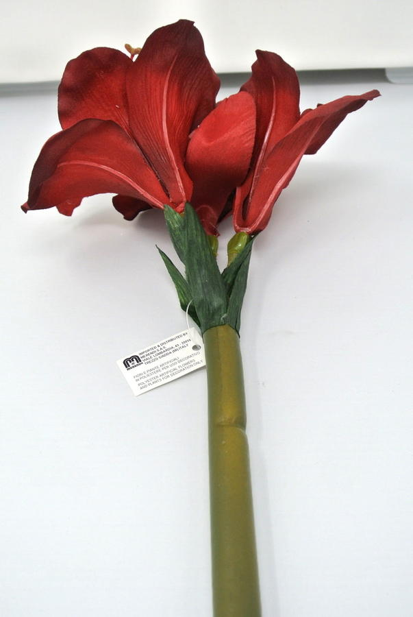 AMARYLLIS - ROSSO RED