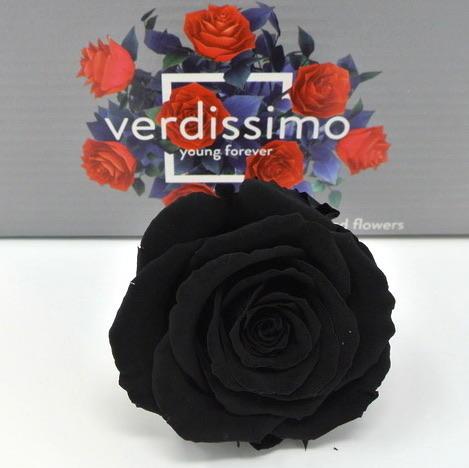 ROSA BOCCIOLO NERA BLACK NOIRE STABILIZZATA - BOX DA 6