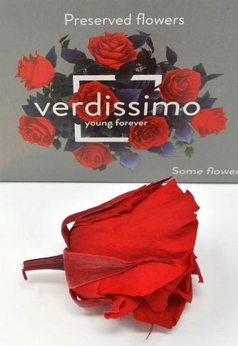 ROSA BOCCIOLO ROSSA RED ROUGE STABILIZZATA - BOX DA 8
