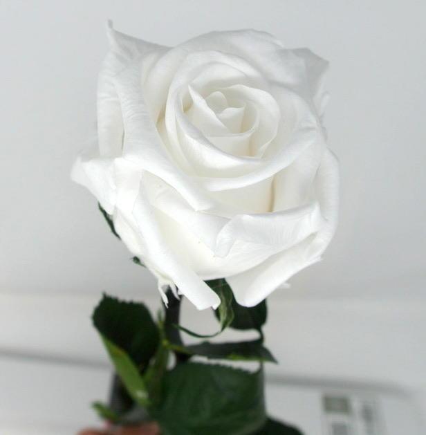 ROSA SINGOLA BIANCO WHITE STABILIZZATA GAMBO LUNGO