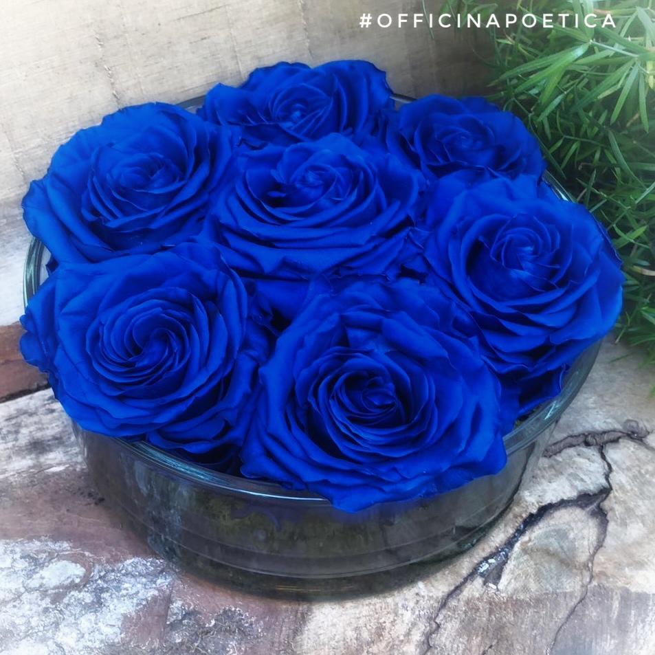 Sette Rose Blupoetico
