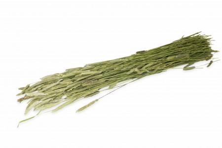 Jr Farm Rametti - Steli di Timothy (Fleolo) - 80 gr.