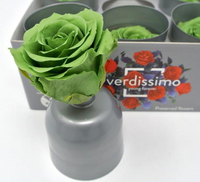 ROSA BOCCIOLO VERDE GREEN VERT STABILIZZATA - BOX DA 6