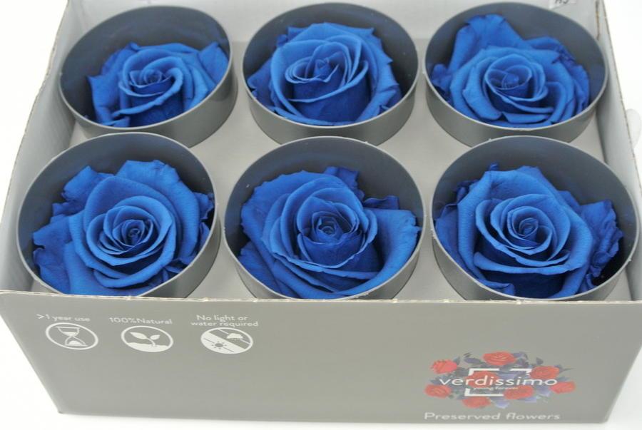 ROSA BOCCIOLO BLU ROYAL BLUE STABILIZZATA - BOX DA 6