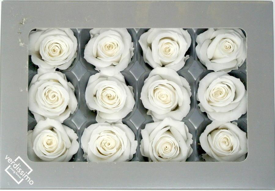 ROSA BOCCIOLO MINI BIANCO WHITE STABILIZZATA - BOX DA 12