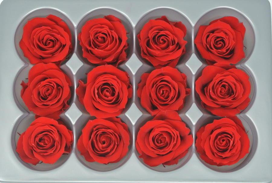 ROSA BOCCIOLO MINI ROSSA RED STABILIZZATA - BOX DA 12