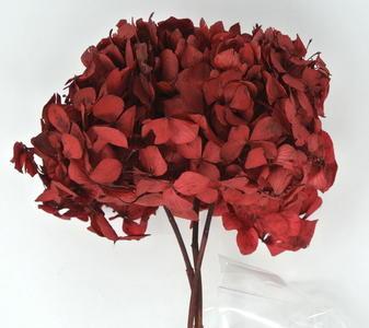 ORTENSIA STABILIZZATA PREMIUM ROSSA RED