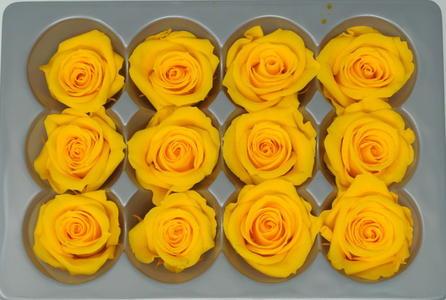 ROSA BOCCIOLO MINI GIALLO SAFFRON YELLOW STABILIZZATA - BOX DA 12