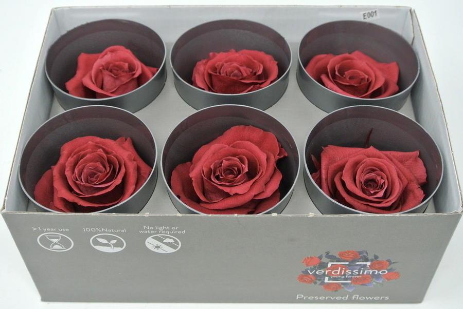 ROSA BOCCIOLO CRANBERRY - Box da 6 - STABILIZZATA