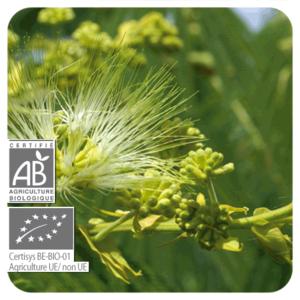 Chiodo di garofano bio olio essenziale