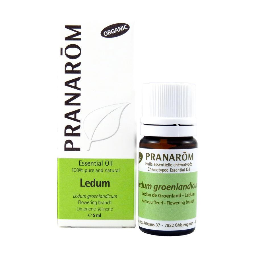Ledum groenlandicum olio essenziale bio