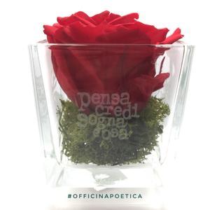 DEDICA- ROSA RossoPoetico