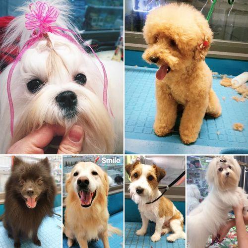 Shanti's Barber Pet Shop